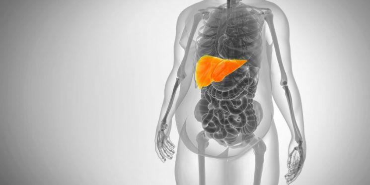 Ожирение печени как лечить - Всё о печени